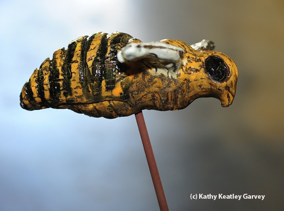 The finished product: a ceramic bee on a metal rod. (Photo by Kathy Keatley Garvey)
