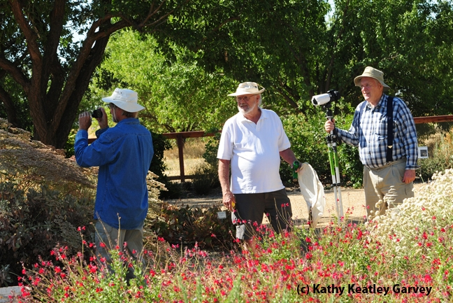 Davis photographer Gary Zamzow (far left); native pollinator specialist Robbin Thorp (center), emeritus professor of entomology at UC Davis, and Davis photographer Allan Jones in the Haagen-Dazs Honey Bee Haven. (Photo by Kathy Keatley Garvey)