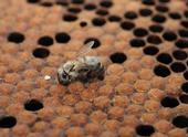 Newborn bee