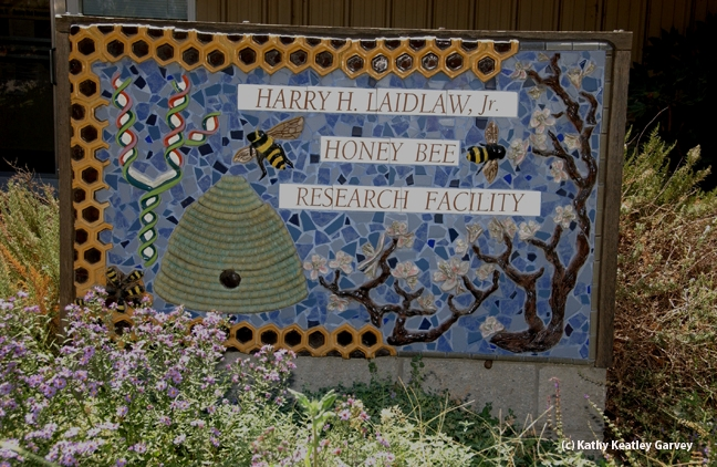 The sign in front of the Laidlaw facility includes bees, a skep, almond blossoms and DNA. It is the work of artist Donna Billick of Davis, a co-founder and co-director of the UC Davis Art/Science Fusion Program. (Photo by Kathy Keatley Garvey)