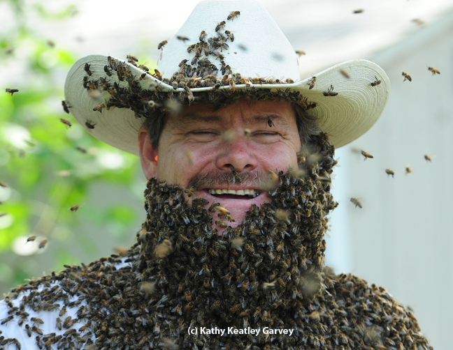Wilton beekeeper Brian Fishback wearing a bee beard at the Harry H. Laidlaw Jr. Honey Bee Research Facility, UC Davis. This photo appeared in Kari-Lynn Winters' book, Buzz About Bees. (Photo by Kathy Keatley Garvey)