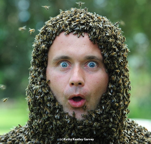 Jakub Gabka, a bee scientist from Poland, held this expression for a minute during the bee beard event at UC Davis. This photo appears on the cover of the current American Bee Journal. (Photo by Kathy Keatley Garvey)