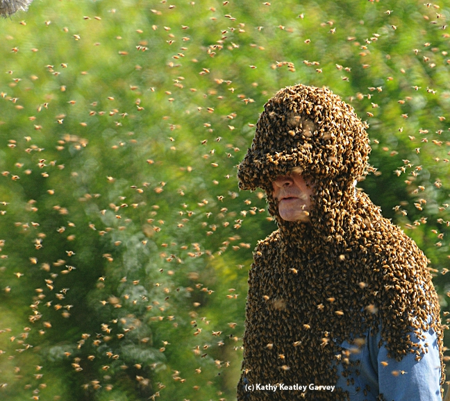 Norm Gary in his bee suit. (Photo by Kathy Keatley Garvey)