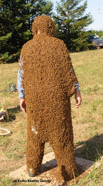 Norm Gary, who will be 80 years old next month, in his bees suit. (Photo by Kathy Keatley Garvey)