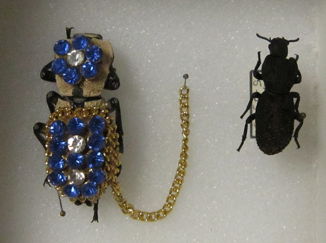 This  bedazzled beetle was worn as a living brooch and originated from Mexico.