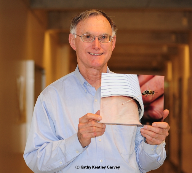 Eric Mussen and the famous bee sting photo showing a bee stinging his wrist. This mounted photo will be auctioned off at the California State Beekeepers' Association conference. (Photo by Kathy Keatley Garvey)