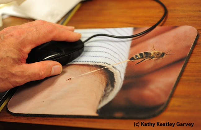 Eric Mussen using his mouse pad. (Photo by Kathy Keatley Garvey)