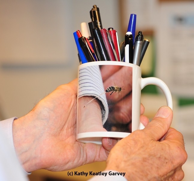 What's a coffee cup without a bee sting image on it? (Photo by Kathy Keatley Garvey)