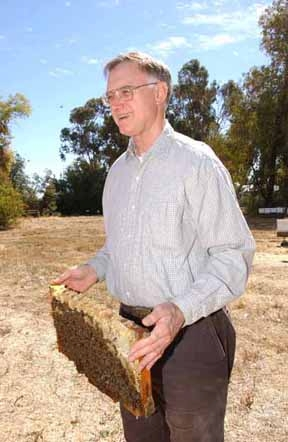 Extension apiculturist Eric Mussen in the apiary of the Harry H. Laidlaw Jr. Honey Bee Research Facility, UC Davis. (Photo by Kathy Keatley Garvey)