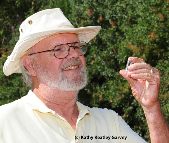 Native pollinator specialist Robbin Thorp, emeritus professor of entomology at UC Davis. (Photo by Kathy Keatley Garvey)