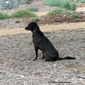 Olive attentively watches for Kris Kolb. (Photo by Kathy Keatley Garvey)