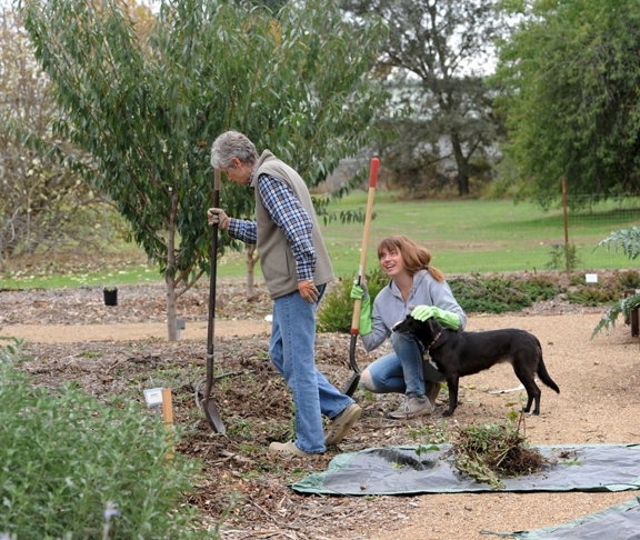 Sarah Hodge pets Olive, while Kris Kolb gardens. (Photo by Kathy Keatley Garvey)
