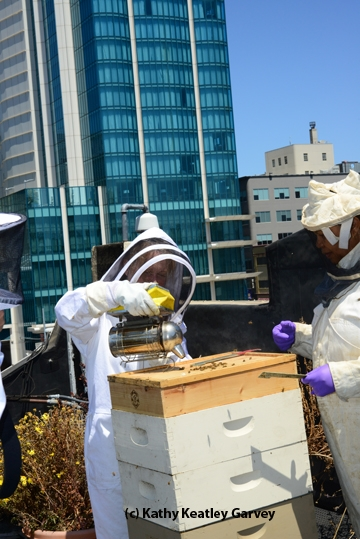 Journalist/beekeper Deb Wandell of the San Francisco Chronicle opens a hive on the rooftop. head of the beekeeping Section, Ministry of Agriculture, Botswana. (Photo by Kathy Keatley Garvey)
