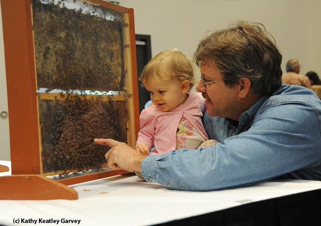 Brian Fishback shows his daughter, Emily, a bee observation hive. (Photo by Kathy Keatley Garvey)