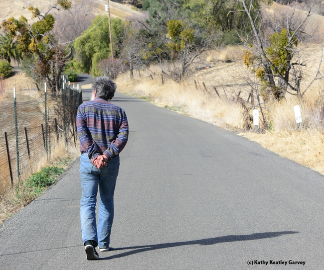 Butterfly expert Arthur Shapiro monitoring his study site on Gates Canyon Road, Vacaville. (Photo by Kathy Keatley Garvey)