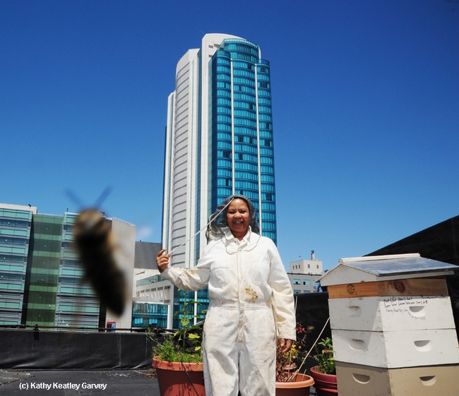 Queen Turner, head of the beekeeping section, Ministry of Agriculture, Botswana government, inspected hives on the roof of the San Francisco Chronicle. (Photo by Kathy Keatley Garvey)