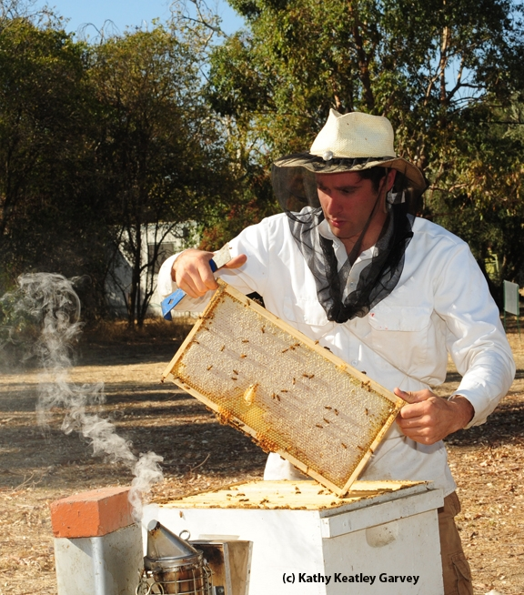 This photo of beekeeper Billy Synk, manager and staff research associate of the Harry H. Laidlaw Jr. Honey Bee Research Facility at UC Davis, appears on the cover of the February edition of the American Bee Journal. (Photo by Kathy Keatley Garvey)