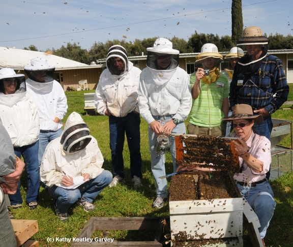 Bee breeder-geneticist Susan Cobey (kneeling at right) at one of her queen bee-rearing classes at UC Davis. (Photo by  Kathy Keatley Garvey)