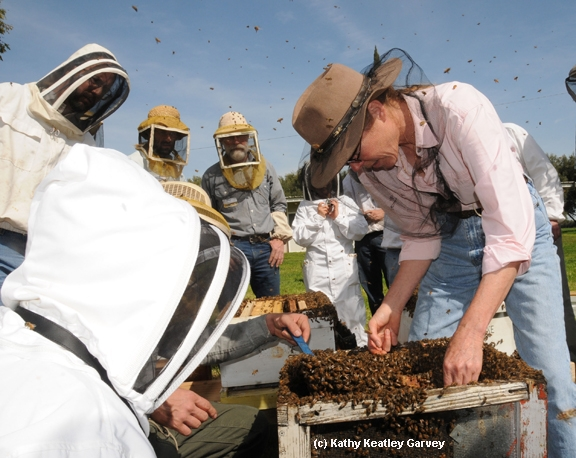 Susan Cobey (right) adding bees. (Photo by Kathy Keatley Garvey)