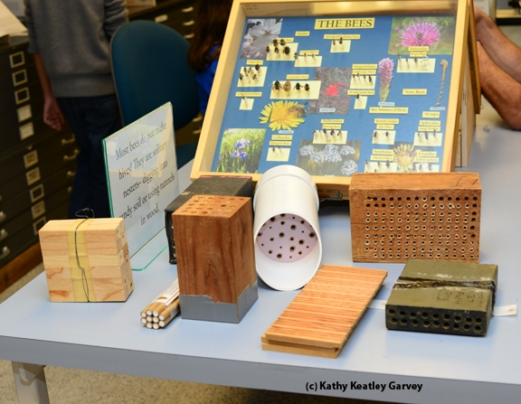 Close-up of bee nesting sites shown March 2 at the Bohart Museum of Entomology. (Photo by Kathy Keatley Garvey)
