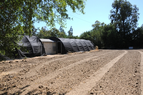 HONEY BEE HAVEN--This is the site of the Haagen-Dazs Honey Bee Haven, a half-acre bee friendly garden to be planted near the Harry H. Laidlaw Jr. Honey Bee Research Facility, UC Davis. Ground preparation is under way. In the back are the hoop houses. (Photo by Kathy Keatley Garvey)