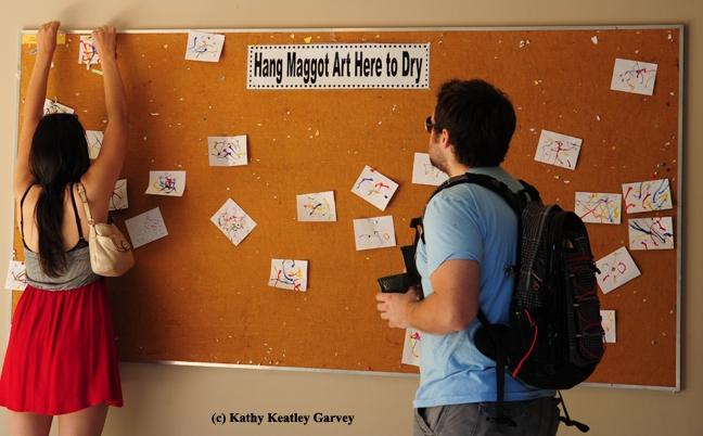 Maggot art is a popular attraction at Briggs Hall. (Photo by Kathy Keatley Garvey)
