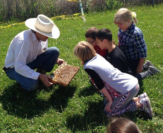 Beekeeper Brian Fishback shows students at Lake Canyon Elementary School, Galt, a frame of bees. (Photo by Beth Bartkowski)