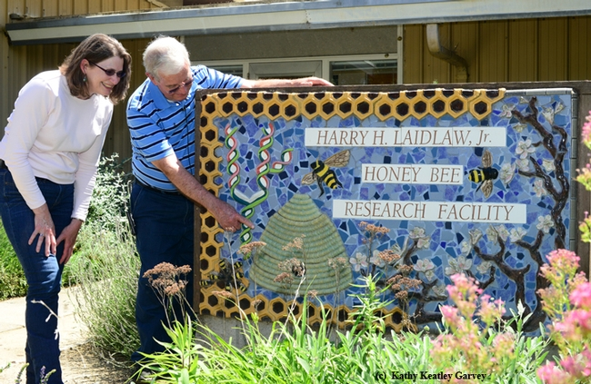 Norm Gary shows Barbara Allen-Diaz the sign in front of the Harry H. Laidlaw Jr. Honey Bee Research Facility. It is the work of Davis artist Donna Billick. (Photo by Kathy Keatley Garvey)