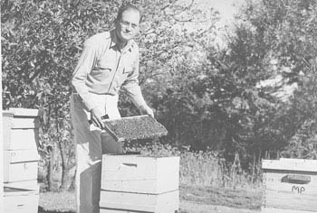 GENETICIST Harry H. Laidlaw Jr. (1907-2003) tends his hives. He served as a member of the UC Davis Department of Entomology faculty from 1947 to 1974. He published his last scientific paper at age 87 and his last book at 90.