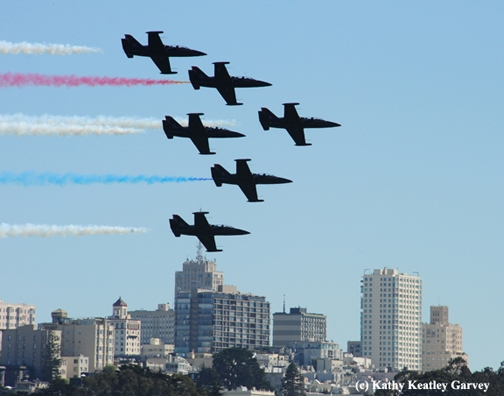Blue Angels roar past the city of San Francisco. (Photo by Kathy Keatley Garvey)