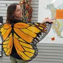 UC Davis entomology undergraduate student Christine Melvin models the monarch wings on display at the Bohart Museum of Entomology, UC Davis. (Photo by Kathy Keatley Garvey)