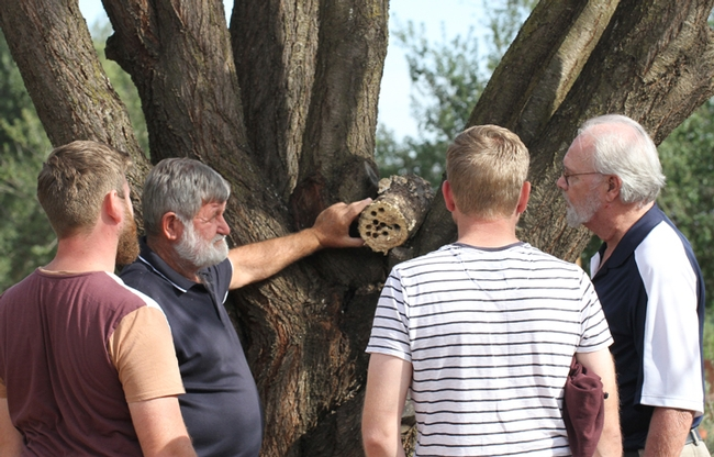 Trevor Monson (second from left) and nephew Reece and son Jonathan chat with native pollination specialist Robbin Thorp (far right), distinguished emeritus professor of entomology. They are looking at a Valley carpenter bee nest. (Photo by Kathy Keatley Garvey)