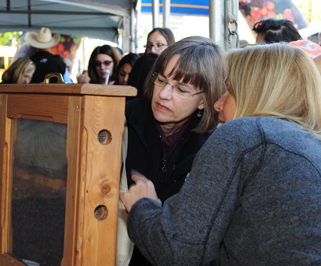 Admiring the bees is Barbara Arciero, managing editor of California Bountiful magazine. With her is beekeeper Wendy Mather. (Photo by Kathy Keatley Garvey)