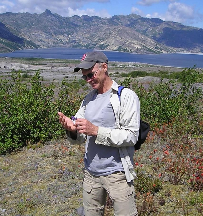 George Kennedy, the William Neal Reynolds Distinguished Professor of Agriculture at North Carolina State University, stopped to count thrips during a vacation to Mt. St. Helens. (Photo by Scott Kennedy)