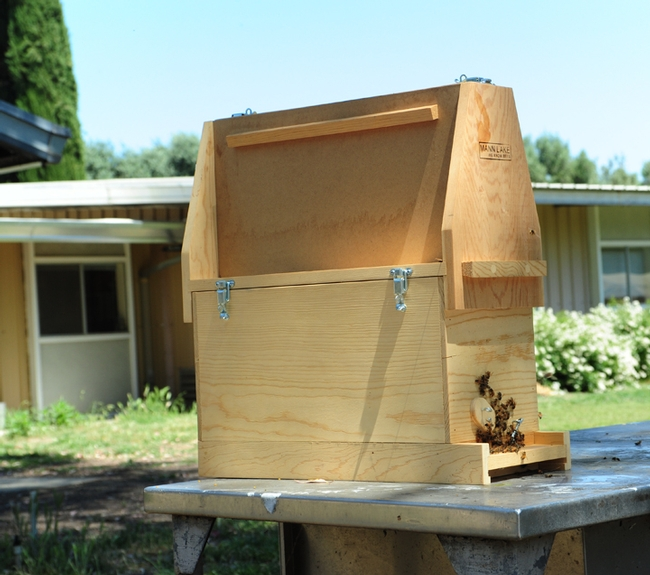 This bee observation hive, named