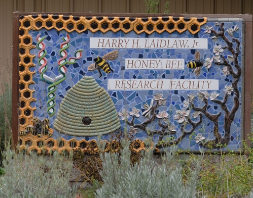 THIS SIGN at the entrance to the Harry H. Laidlaw Jr. Honey bee Research Facility is the work of Davis artist Donna Billick. The hole in the skep leads to a bee hive attached to the back of the sign. (Photo by Kathy Keatley Garvey)