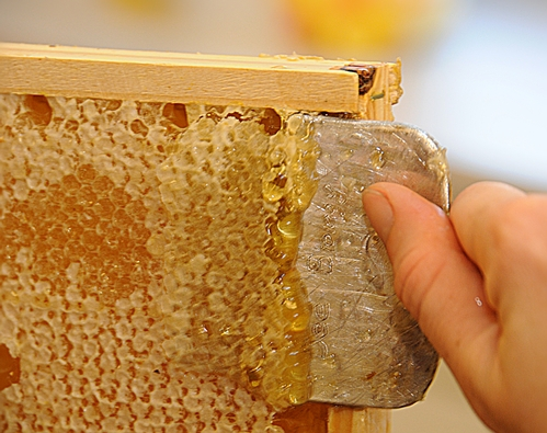 Bee Biology