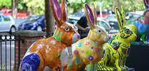 A line of jackrabbits in the Vacaville Museum courtyard. (Photo by Kathy Keatley Garvey) for Bug Squad Blog
