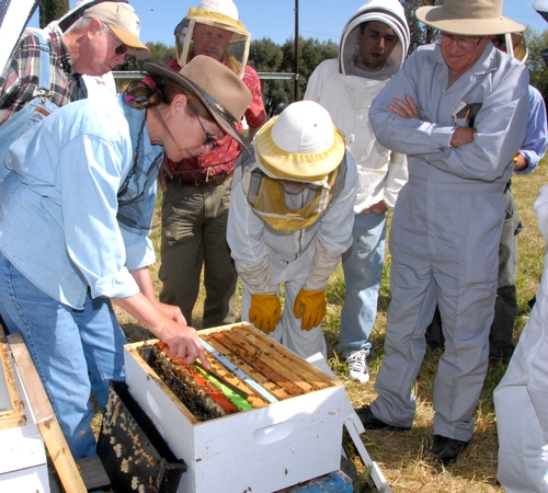 SUSAN COBEY (far left), bee breeder-geneticist and manager of the Harry H. Laidlaw Jr. Honey Bee Research Facility at the University of California, Davis, with a recent class on queen bee-rearing. (Photo by Kathy Keatley Garvey)
