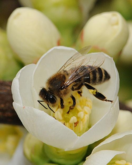 Ah, Nectar!