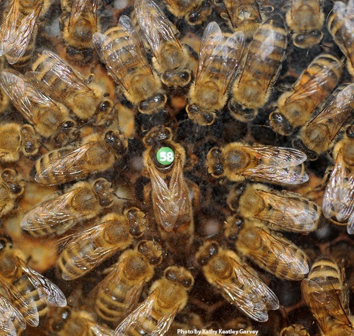 Tolle Anatomy And Physiology Of Honey Bee Ideen - Menschliche ...