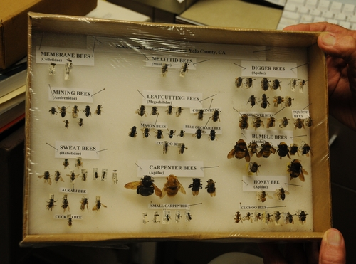 Yolo County Bee Collection