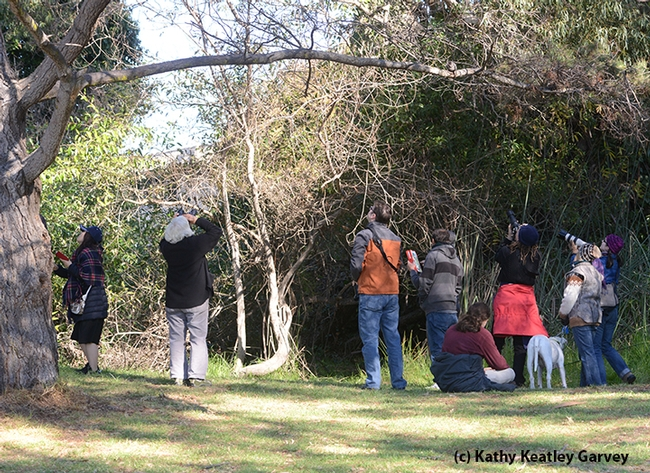 Butterfly aficionadas,  photographers and passersby---along with dogs--gather to check out the monarchs. (Photo by Kathy Keatley Garvey)