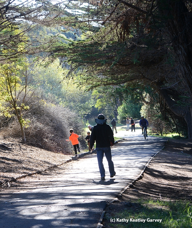 The path to the 14th hole of the disc golf course at the Berkeley Aquatic Park is an easy one, and about a quarter of a mile from the parking lot. (Photo by Kathy Keatley Garvey)