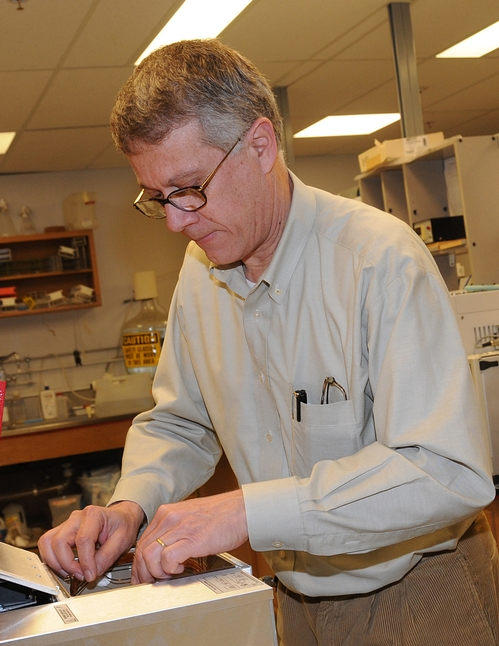 CHEMICAL ECOLOGIST Walter Leal working in his UC Davis lab. His lab revealed the secret mode of the insect repellent DEET in groundbreaking research published in 2008.(Photo by Kathy Keatley Garvey)