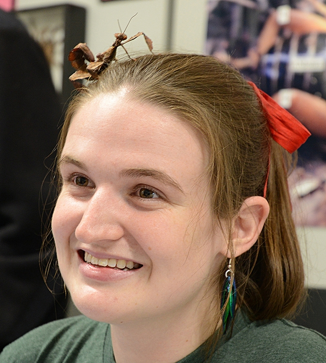 Graduate student Charlotte Herbert, who is seeking her doctorate in entomology from UC Davis, has a visitor in her hair--a stick insect barrette. (Photo by Kathy Keatley Garvey)