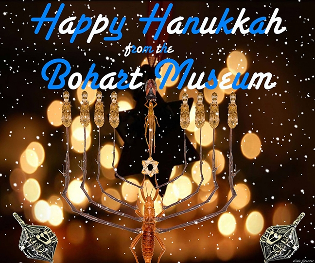 Happy Hanukkah! With stick insects. (Image by Wade Spencer)