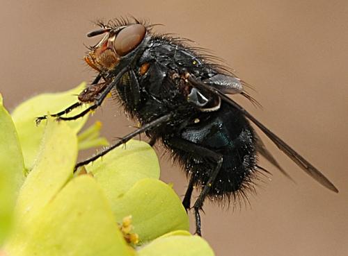 Sip of Nectar