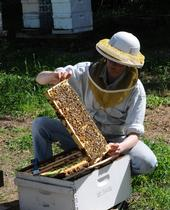 Tending the Bees