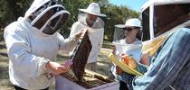 Extension apiculturist Elina Niño of the UC Davis Department of Entomology and Nematology, is shown here working with beekeeping course students. She will be a speaker at the